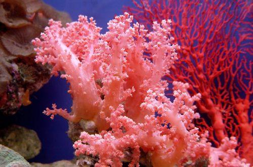 Museo del corallo